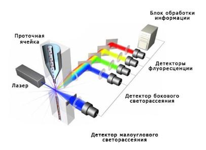 Рис.56. Принцип работы проточного цитометра