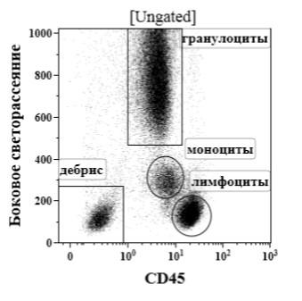Рис. 58. Анализ экспрессии CD45 лейкоцитами периферической крови. По оси абсцисс – уровень экспрессии CD45; по оси ординат – боковое светорассеяние. Комментарии в тексте.