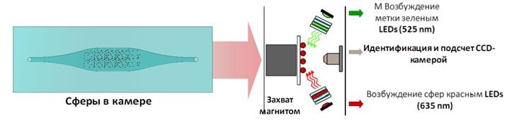 Рис. 62 Принцип работы мультиплексного анализа.