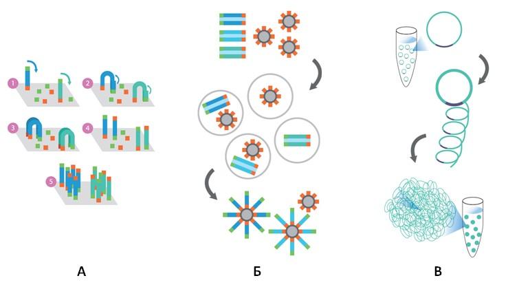 Рис. 74. Технологии клональной амплификации