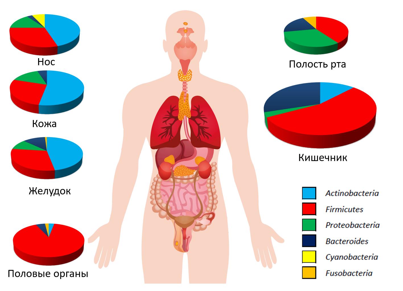 Рис. 7. Состав микробиоты человека.