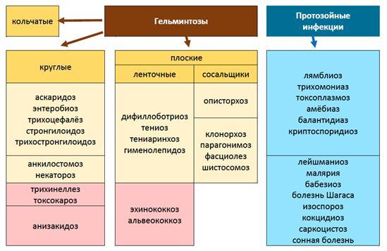 Глава 13. Индуцированные иммунные нарушения