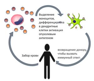 Глава 25. Клеточно-тканевая терапия
